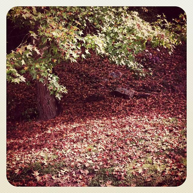 folhas-paisagem